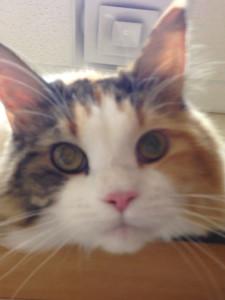 Pet Case Study: Feline Inflammatory Polyp
