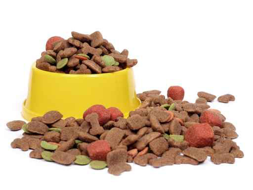 Pet Food Allergy