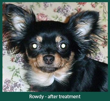 Photo of cured Canine Eosinophilic Furunculosis
