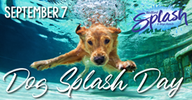 Dog splash day