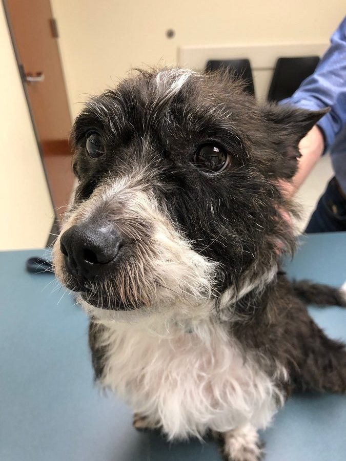 Rocky in Remission