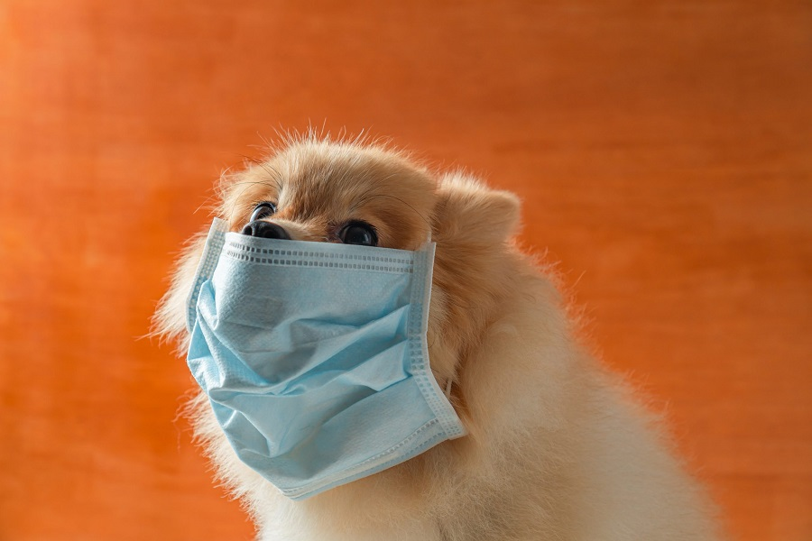 Coronavirus animal allergy veterinary