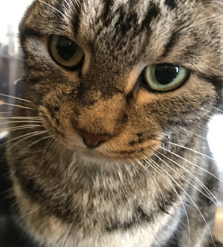 "Pet Spotlight/Case Study: ""McGee the Cat and His Mystery Sores"""