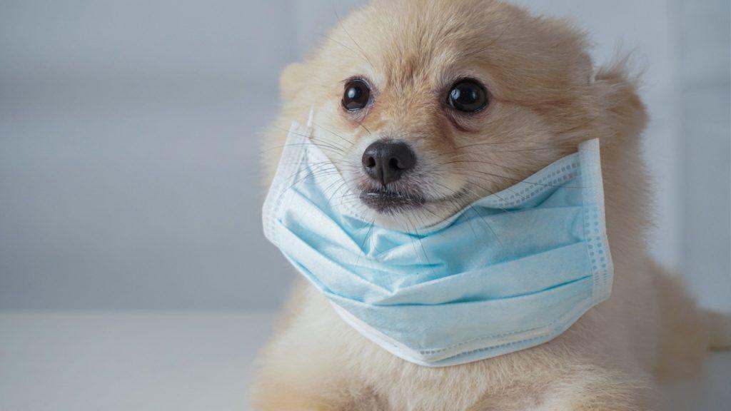 COVID mask dog